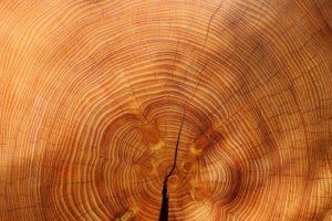 Impregnácia dreva zabezpečí hĺbkovú ochranu